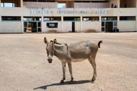 Kismayo - donkey